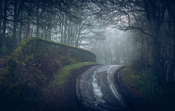 Photo wallpaper forest, road, fog