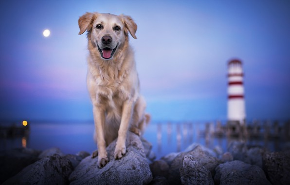 Picture sea, stones, the ocean, lighthouse, dog