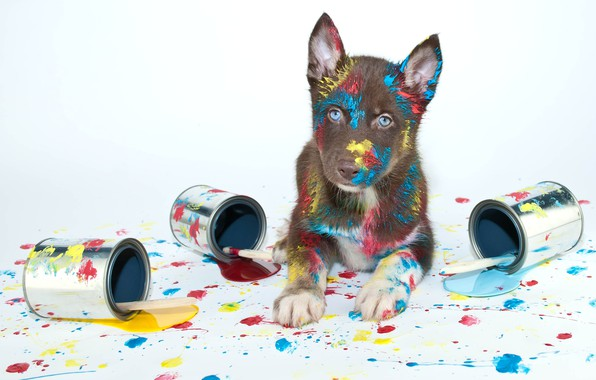 Picture paint, puppy, brush