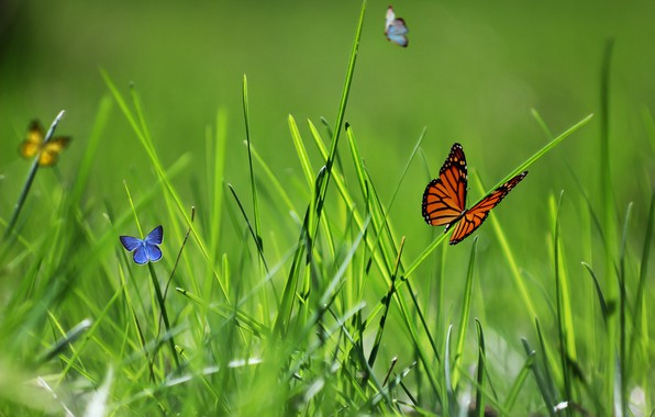 Picture butterfly, nature, spring, weed