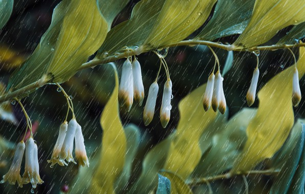 Photo wallpaper leaves, drops, macro, branch, God