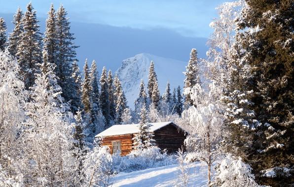 Picture winter, forest, house, Sweden, Sweden, Kvikkjokk