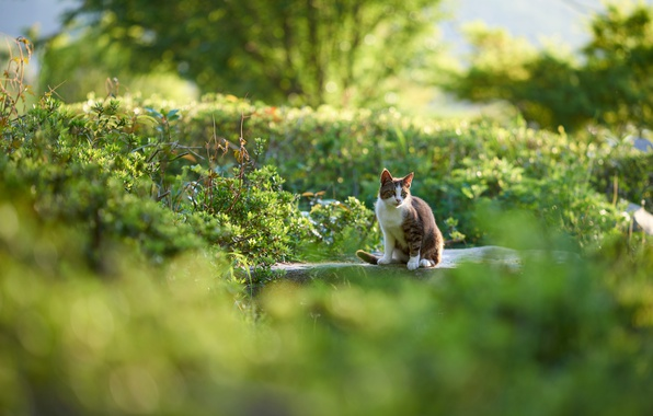 Picture greens, cat, cat, nature