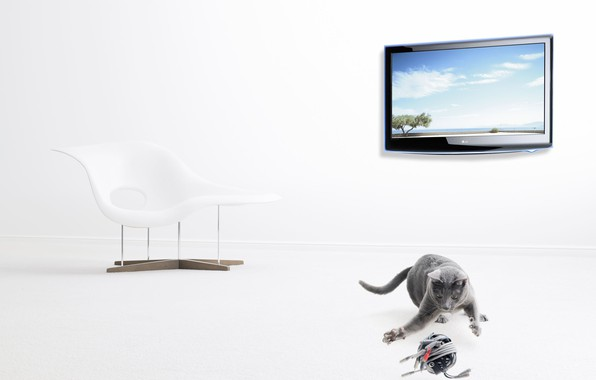 Picture tangle, TV, grey cat, Christophe Gilbert, contemporary chair
