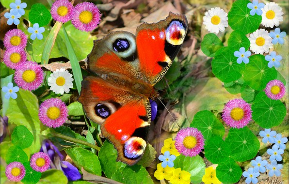 Picture Macro, Butterfly, Flowers, Flowers, Butterfly