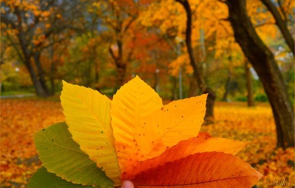 Picture Macro, Autumn, Leaves, Autumn, Colors, Macro, Leaves