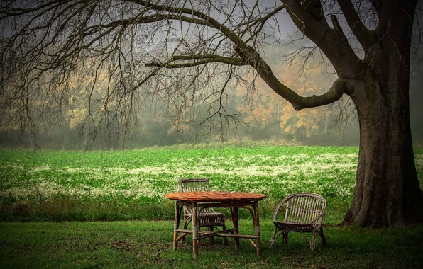 Picture summer, table, tree, chair