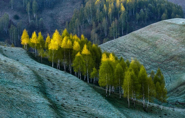 Picture summer, trees, nature, hills, spring, slope