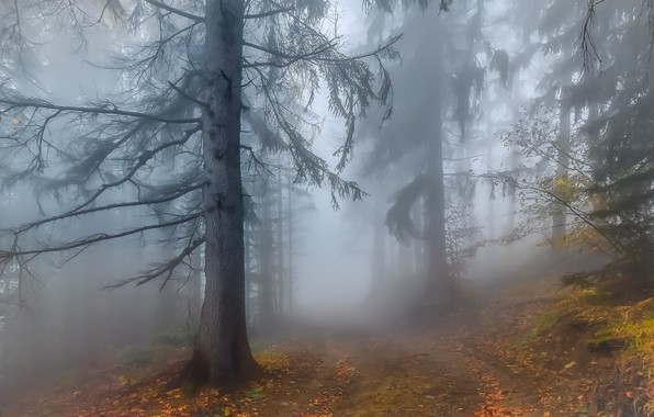 Picture Autumn, Fog, Forest, Leaves, Twigs