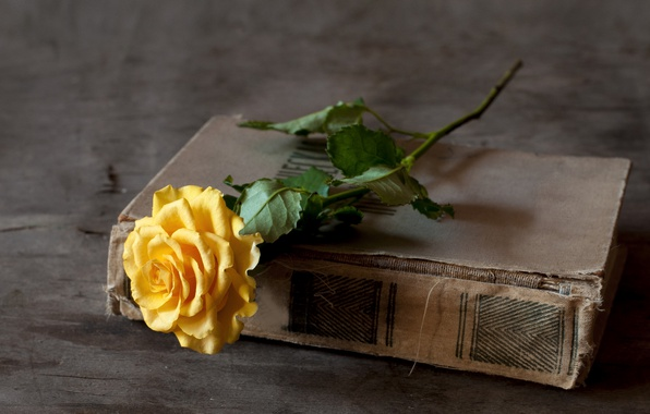 Picture rose, book, yellow
