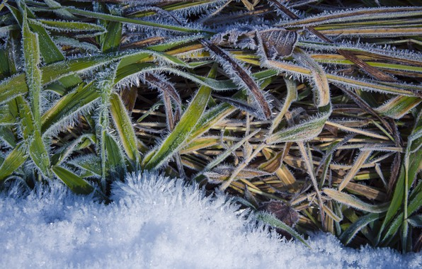 Picture winter, frost, white, grass, snow, green, background, earth, frost