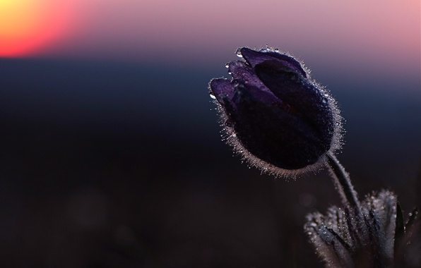 Picture drops, macro, sunset, Bud, sleep-grass, cross