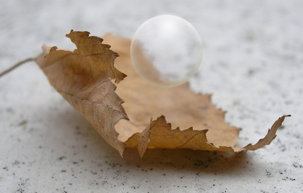 Picture autumn, macro, sheet, ball, day, a balloon, tree leaf