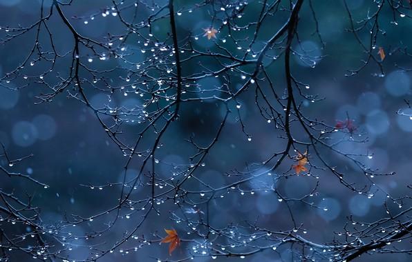 Picture drops, macro, branches, foliage