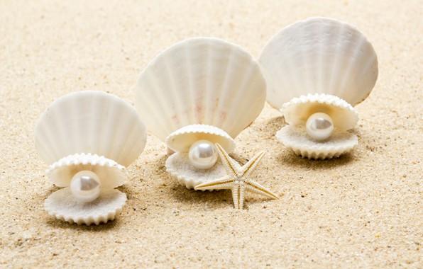 Picture shell, pearl, starfish, sunshine, beach, sea, sand, seashell