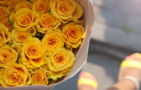 Picture roses, bouquet, yellow, buds