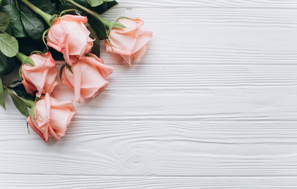 Picture flowers, pink, Roses, buds, wooden background