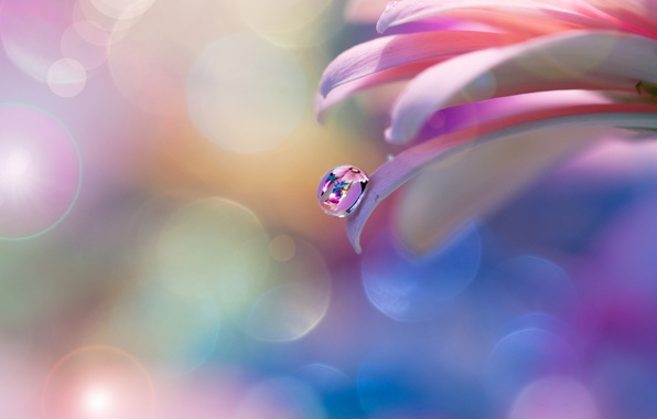 Picture flower, tenderness, drop, petals