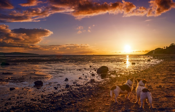 Picture dogs, sunset, shore, friends