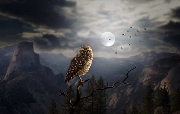 Picture forest, trees, mountains, birds, night, rocks, owl, the moon, branch, art, silhouettes