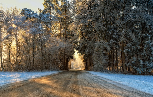 Picture winter, road, forest, morning