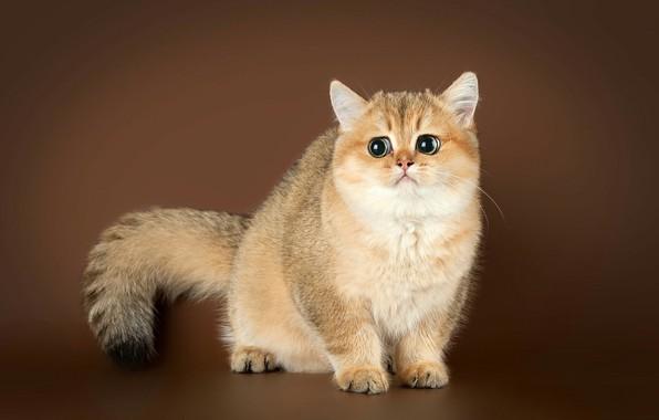 Picture cat, tail, sad