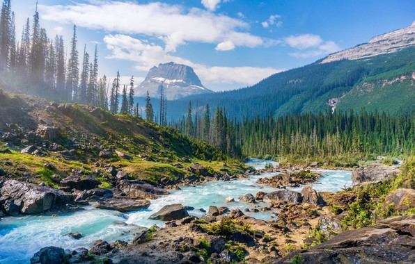 Picture forest, landscape, mountains, river, stones, mountain, forest, river, landscape, pine, mountain, stones, the mountains, Pine