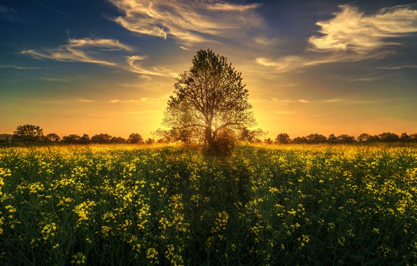 Picture the sun, sunset, flowers, tree, meadow