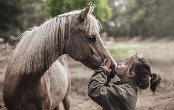 Picture mood, horse, girl