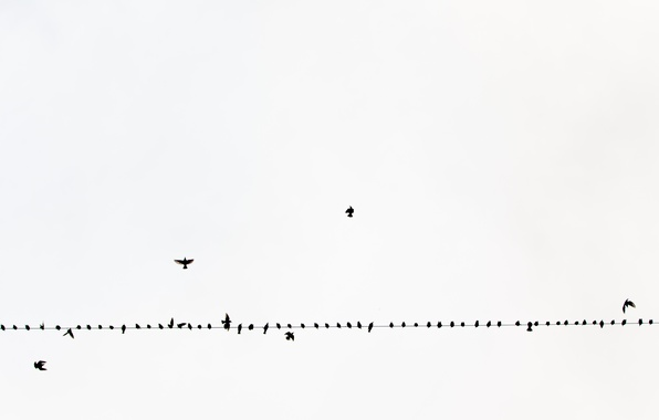 Picture the sky, birds, wire