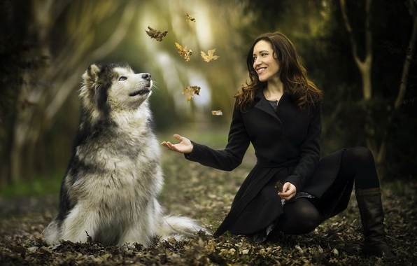 Picture leaves, girl, each, dog, Malamute