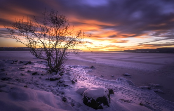Picture sunset, Buskerud, lake Tyrifjord, Lake Tyrifjorden, Buskerud, Norway, lake, tree, Norway, winter, snow, Lake Tyri