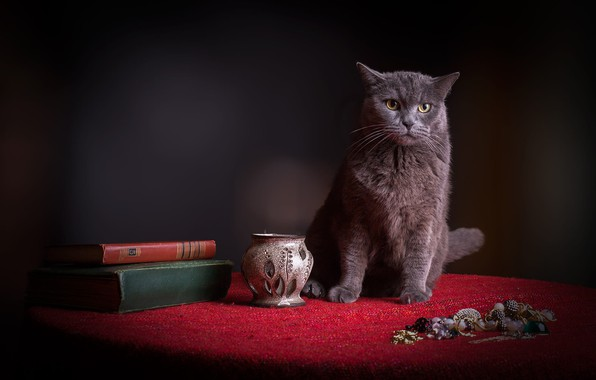 Picture cat, cat, red, the dark background, table, grey, books, fabric, still life, face, jewelry, dissatisfaction, …