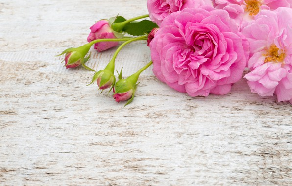 Picture flowers, roses, bouquet, pink, white, buds, pink, flowers, roses, bud