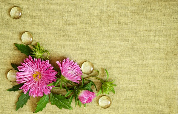 Picture drops, flowers, background, fabric, asters