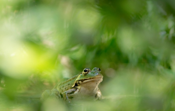 Picture nature, color, frog