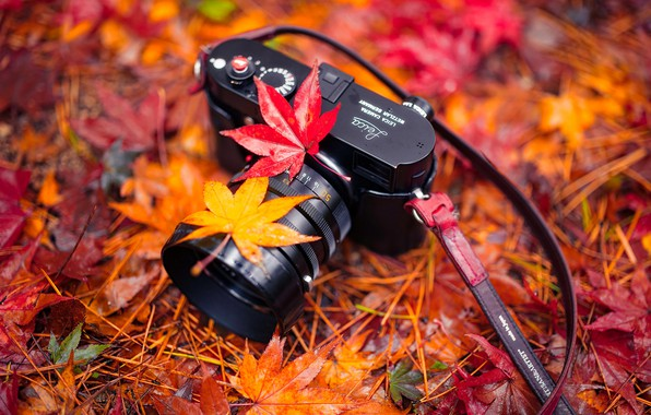 Picture leaves, nature, camera, Autumn, Harmony