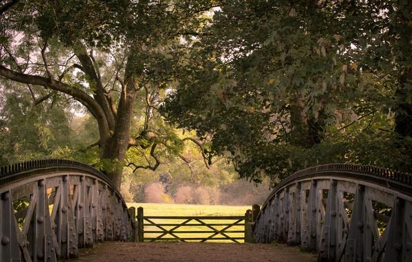 Picture autumn, trees, bridge, England, gate, England, Berkshire, Berkshire, Cookham, Cookham, Cookham Lock