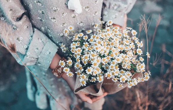 Picture girl, flowers, chamomile