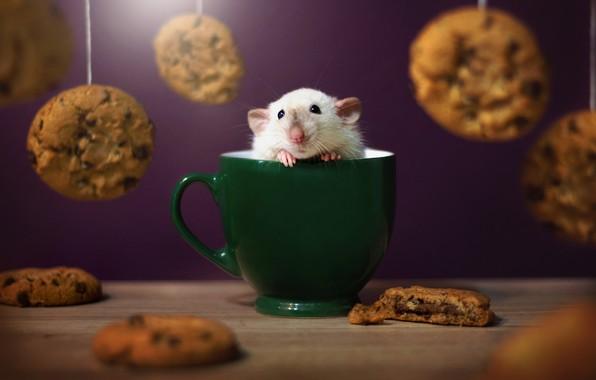Picture cookies, mug, rat