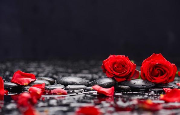 Photo wallpaper water, rose, petals, pebbles