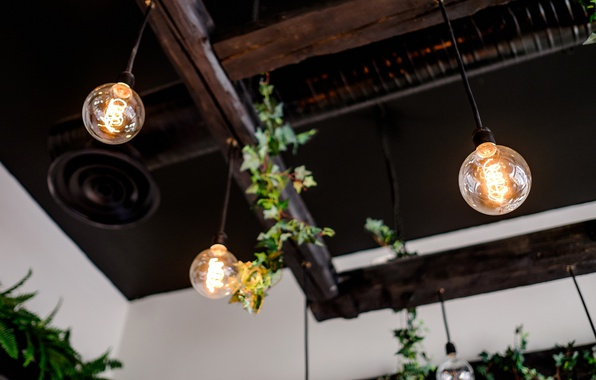 Picture lamp, plant, interior, the ceiling