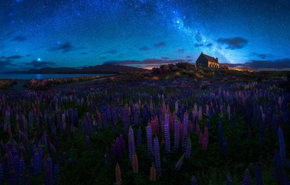 Picture summer, the sky, flowers, night, spring, New Zealand, Church, temple, the milky way, lupins