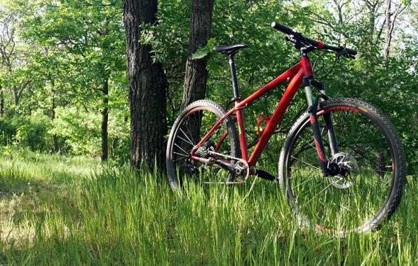 Picture grass, Nature, spring, Sport, Bike, Yellowstone, 2018, Bike, Sport, Canyon, Salen