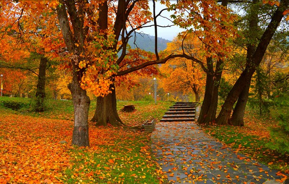 Picture Autumn, Trees, Park, Fall, Foliage, Park, Autumn, Colors, Trees, Falling leaves, Leaves