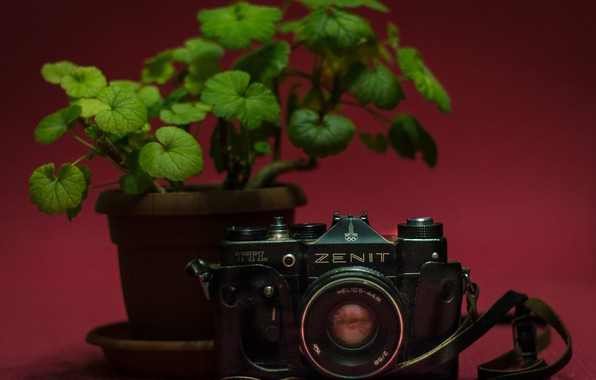 Picture flower, green, style, photo, pink, the camera, Zenit