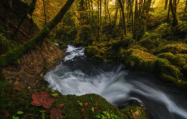 Picture autumn, forest, light, nature, sheet, river, foliage, stream