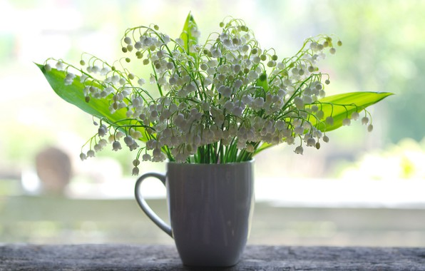 Picture flowers, mood, beauty, plants, lilies of the valley, a bunch, flora, bouquets, white color
