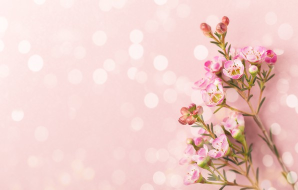 Picture background, Flowers, branch