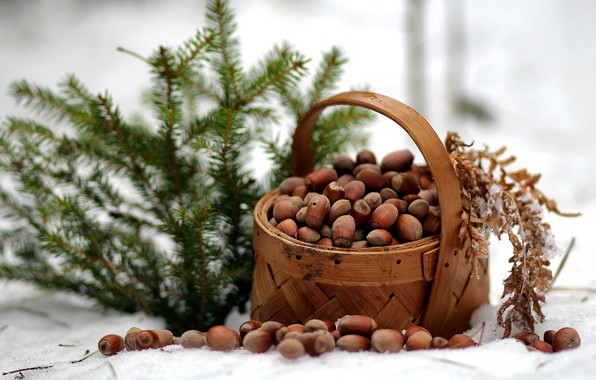 Picture winter, forest, nature, spruce, frost, walk, nuts, basket, composition, January, report
